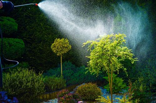 Spraying for pest in garden area