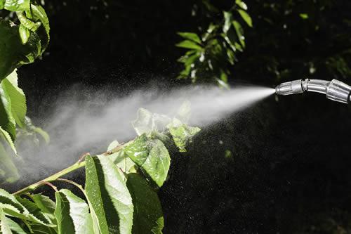 someone spraying for pests