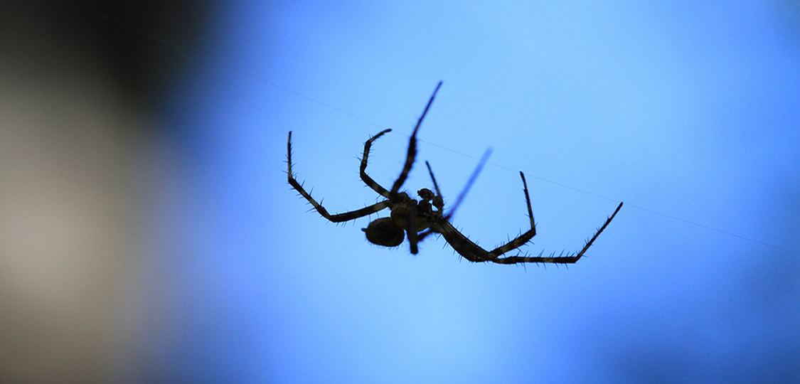 Spider with blue background