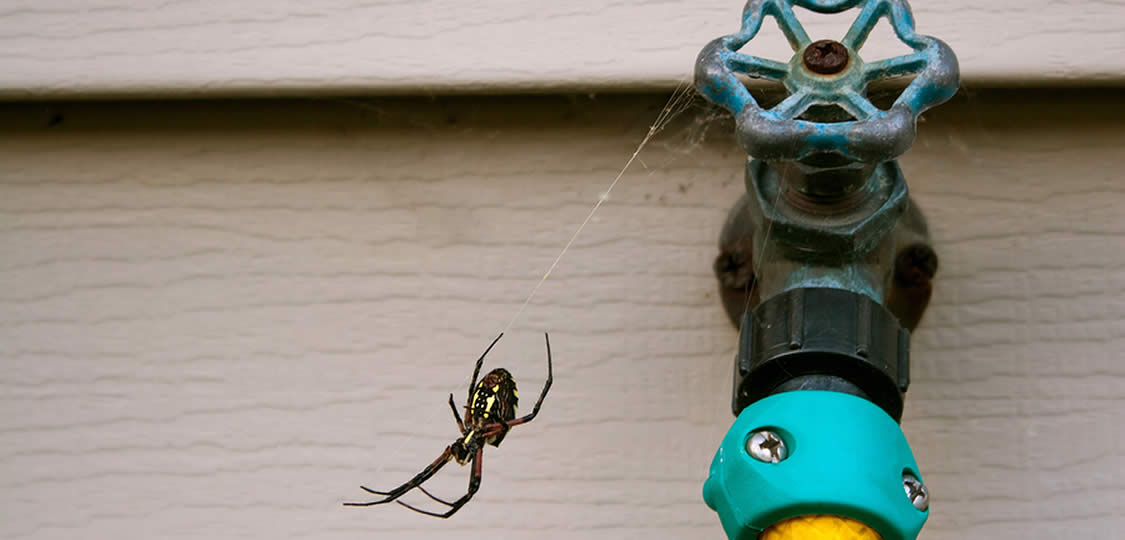 large spider at a home in Austin Texas