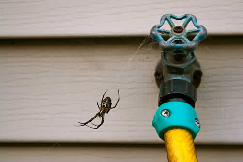 Spider at a home in Austin, Texas